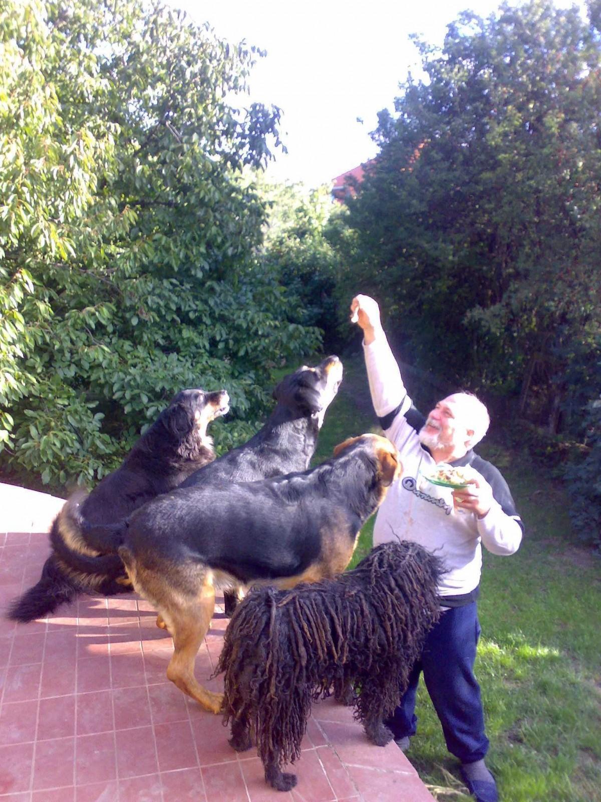 <p>2008 áprilisa, ekkor még teljes volt a házi állatsereglet</p>